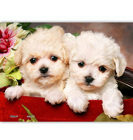 Puzzle 150 MINI – Piezas de Plástico – Puppies in Gift Box